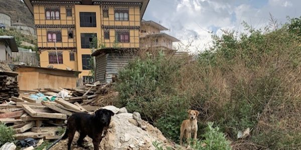 Bhutan Animal Rescue and Care