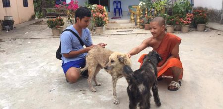 World Spay Day 2021: Partner Spotlight – Phnom Penh Animal Welfare Society